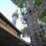 osmanaga-cami-kadikoy-minare-agac-1200x800